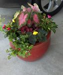 Container Gardens Image